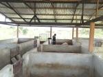 Pig farming in Ghana